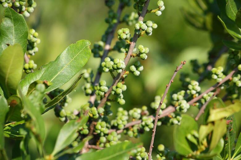 bayberry-marie-viljoen