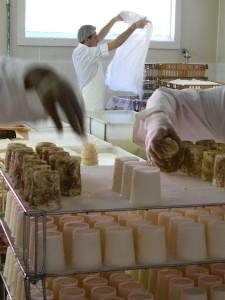 CF Cheese Making