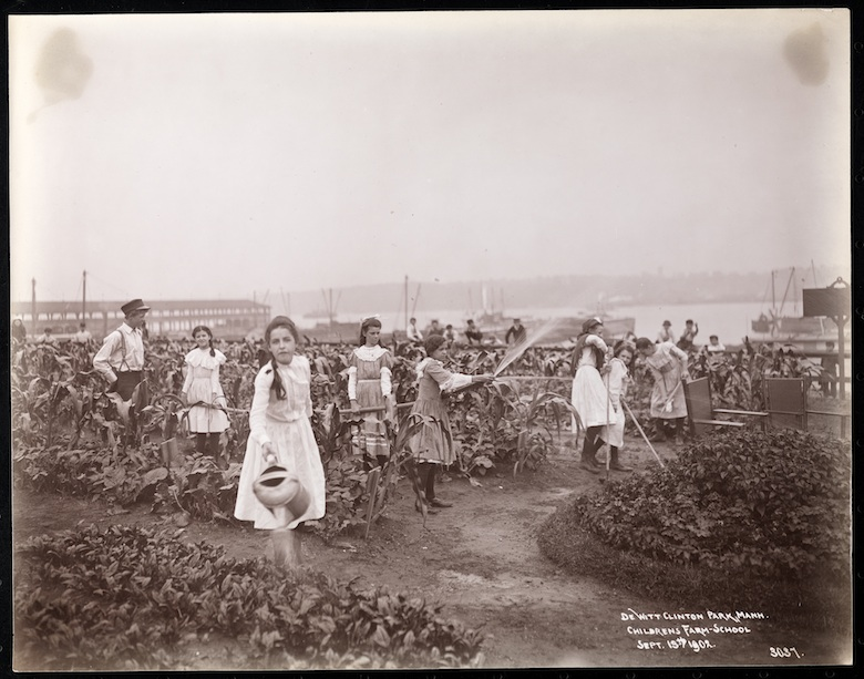 Girls watering crops at DeWitt Clinton Park in Manhattan.