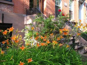 day lilies marie viljoen