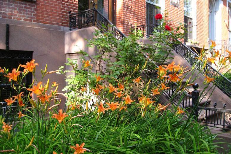 day-lilies-marie-viljoen