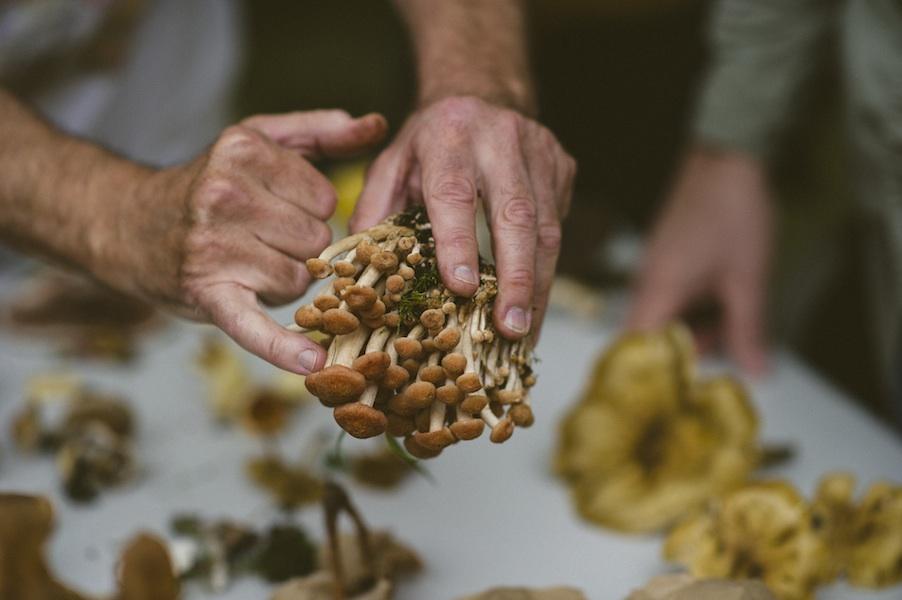 Long Island Mycological Society