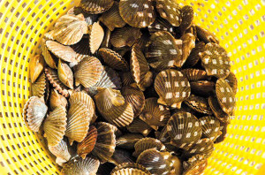 whole-peconic-bay-scallops-in-yellow-basket