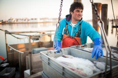 Dock to Dish fishermen unload the days haul of monkfish.