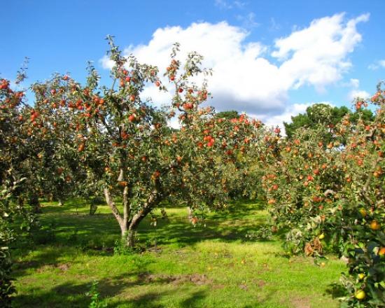 orchard/Flickr London looks.jpg