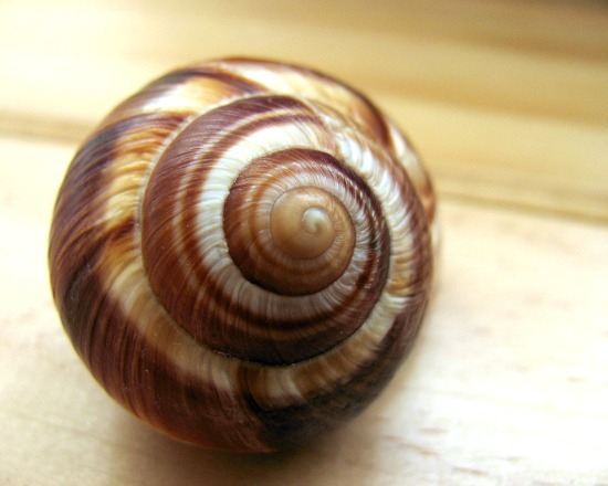 flickr_escargot