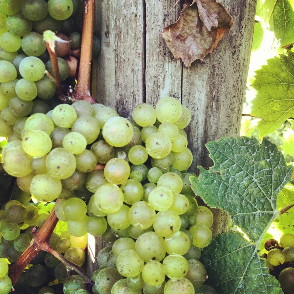 bellwether wine cellars Facebook