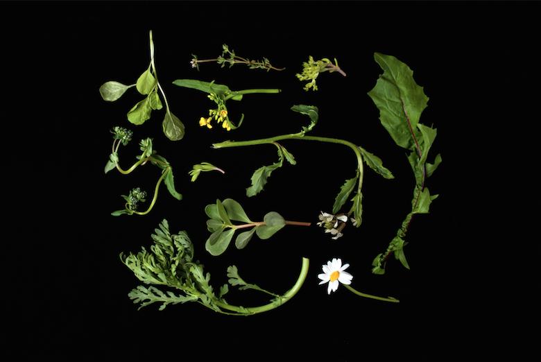 herbs press lounge