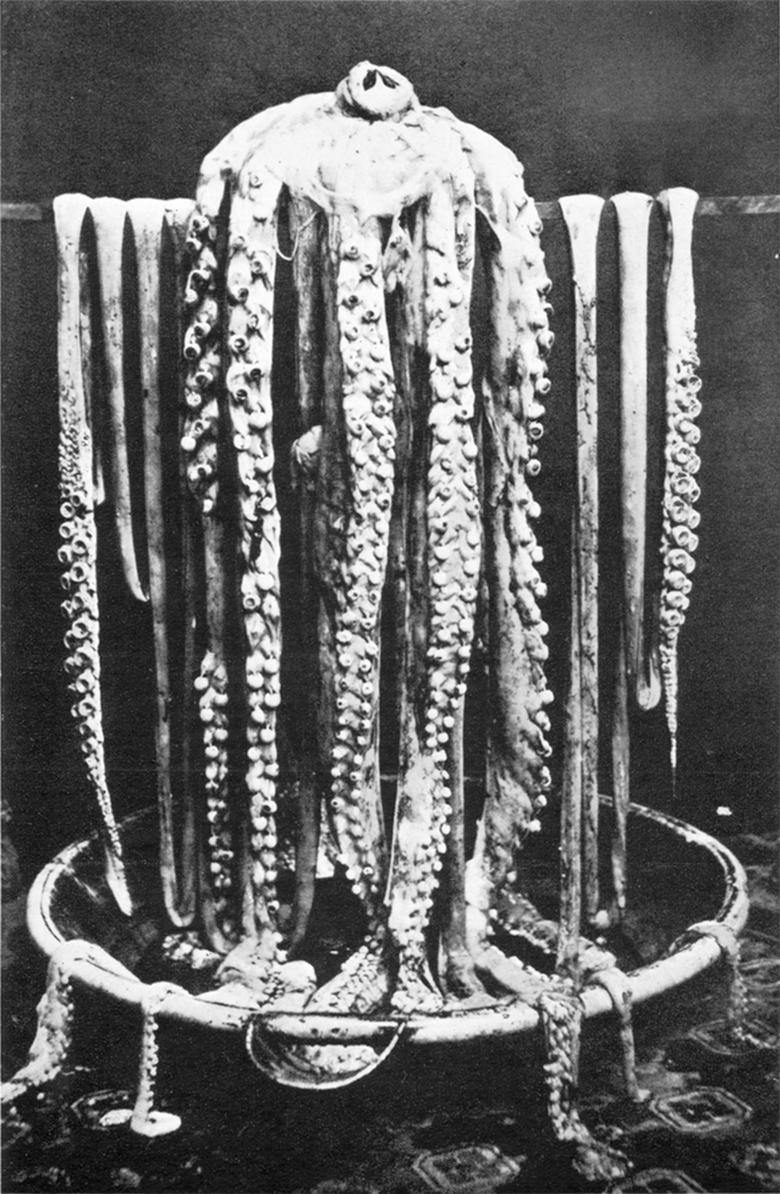 780px-Logy_bay_giant_squid_1873 copy