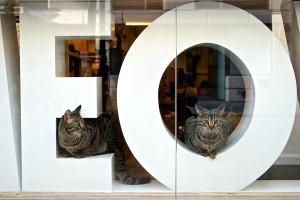 meow-parlour-1
