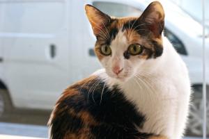 meow-parlour-10