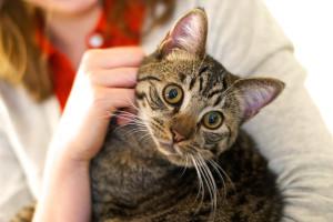 meow-parlour-13