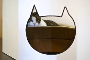 meow-parlour-16
