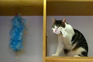 meow-parlour-17