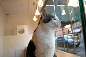 meow-parlour-2