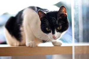 meow-parlour-24