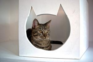 meow-parlour-31