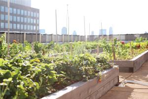 Rooftop Farm - Horizontal - credit Melissa Hom