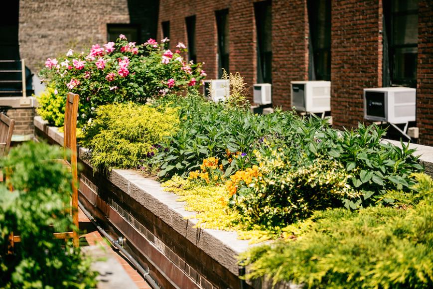hospital rooftop garden