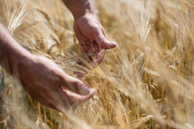 2015_SGBleicher_Local_Grains_Miglioreli_004