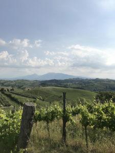ciuciuwine_ALW_Italy_17