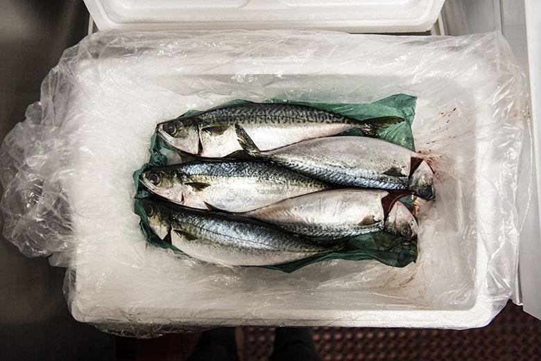oona-tempest-sushi-bae